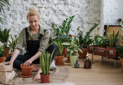 buy plants online